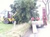 Der Baum fürs Anleuchten, 21.11.09